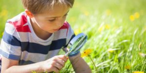 Explore Dorothea Dix Park - Love Bugs! For ages 2-6 @ Dorothea Dix Park Big Field | Raleigh | North Carolina | United States