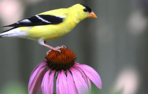 Gardens for Birds @ Glenwood Club | Raleigh | North Carolina | United States