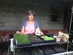 Growing Microgreens @ The Well Fed Community Garden   Raleigh   North Carolina   United States